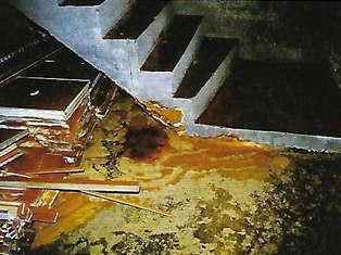 Echter Hausschwamm in einem Gewölbekeller