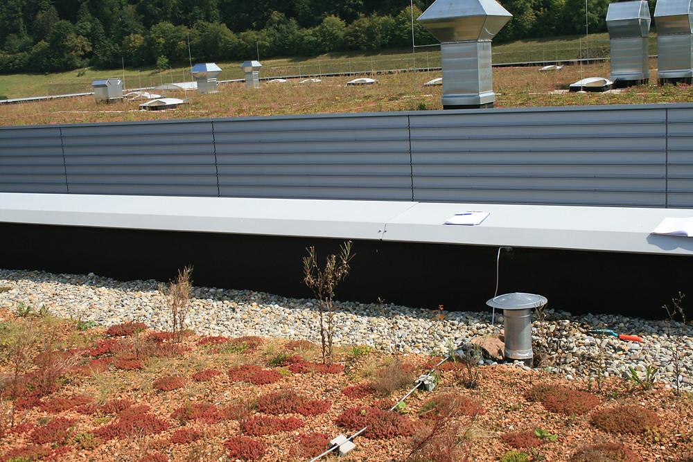 Die Begrünung wird vom Dachrand durch einen mindestens 50 cm breiten Kiesstreifen getrennt