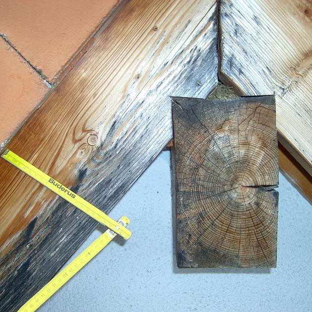 Holzpilze am Dach