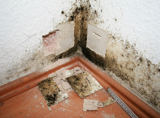 Schimmelpilze in Wohnungen gefährden die Gesundheit