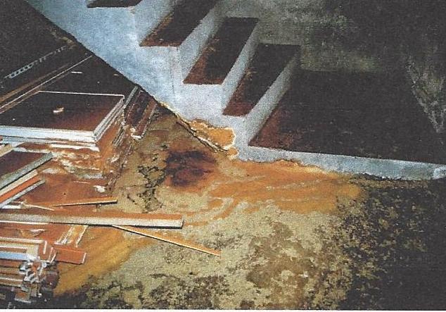 Echter Hausschwamm im Keller