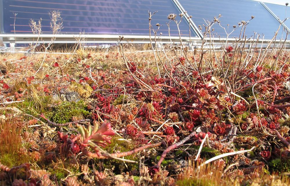 Photovoltaikanlage auf einem begrünten Flachdach