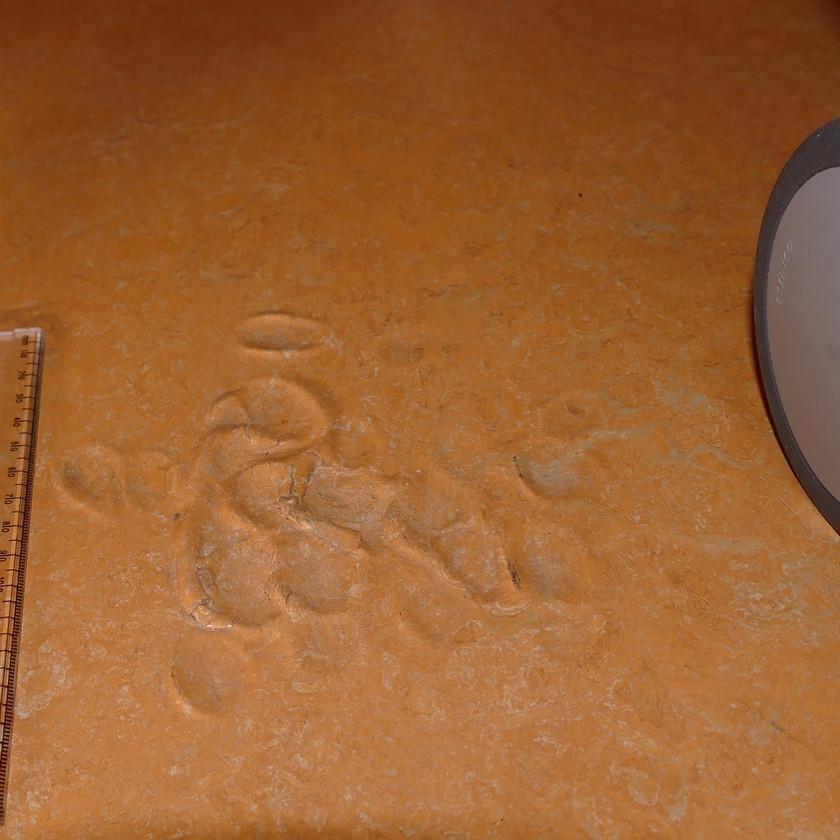 Eindrücke in einem Bodenbelag aus Linoleum