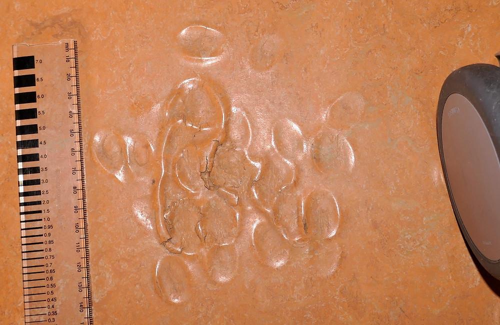 Schäden an einem Bodenbelag aus Linoleum