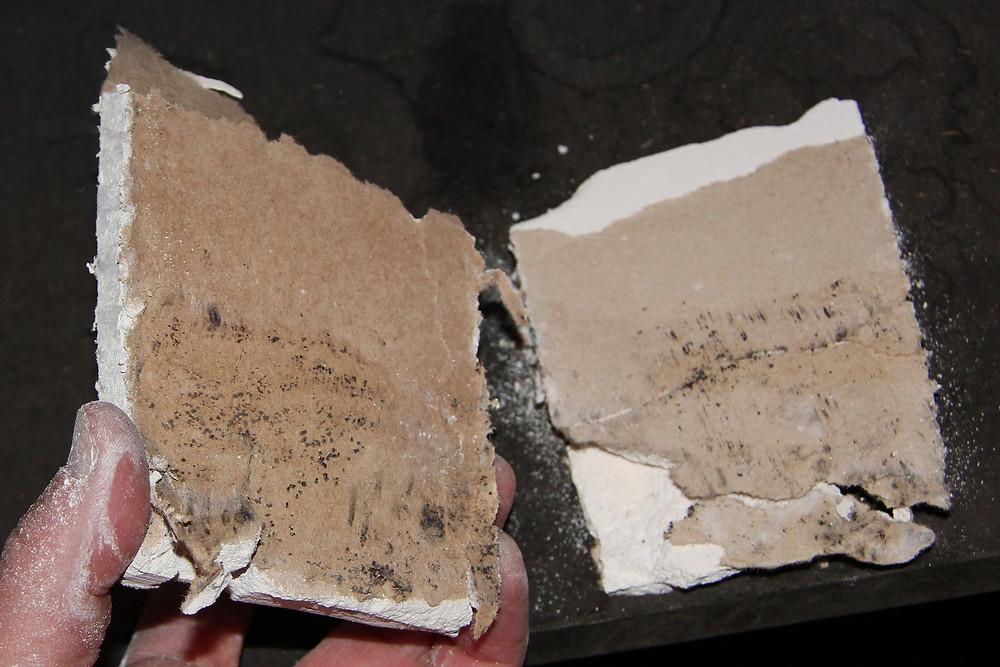 Abstellraum, Trennwand zum Badezimmer; Probe aus Öffnungsstelle 1 im Sockelbereich: zwischen der ersten und der zweiten Lage der Gipskartonbekleidung waren Schimmelpilzbildungen vorhanden.