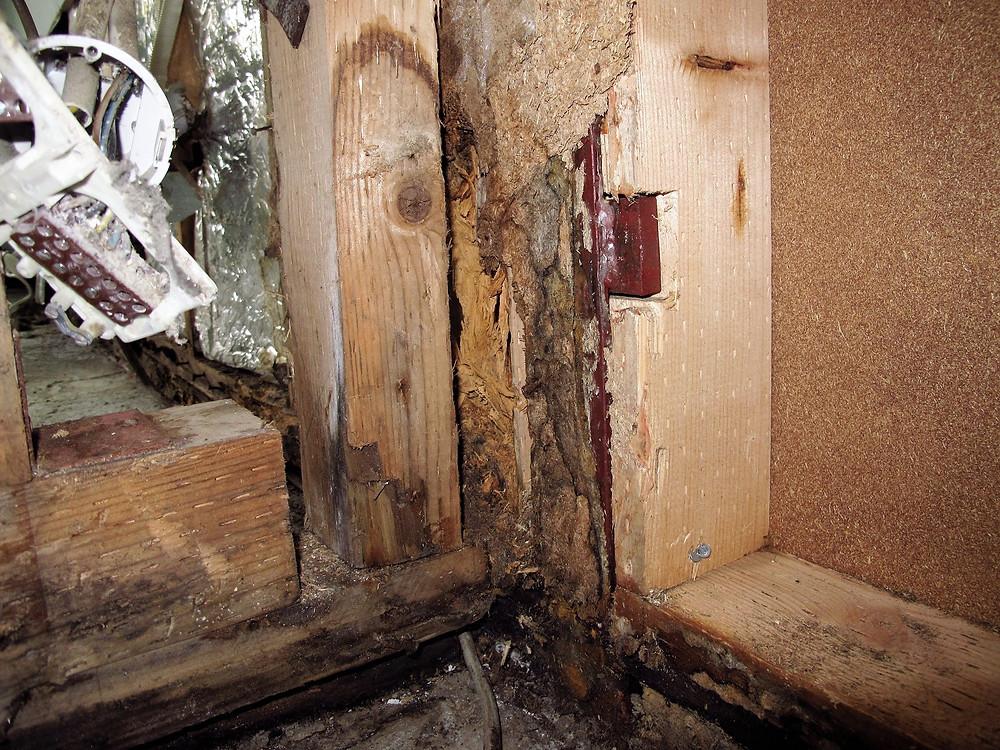 Holzzerstörende Pilzbildungen an der Wandkonstruktion