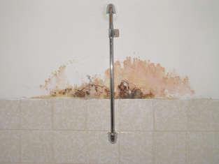 Schimmel an der Wand zur Dusche in einem Badezimmer