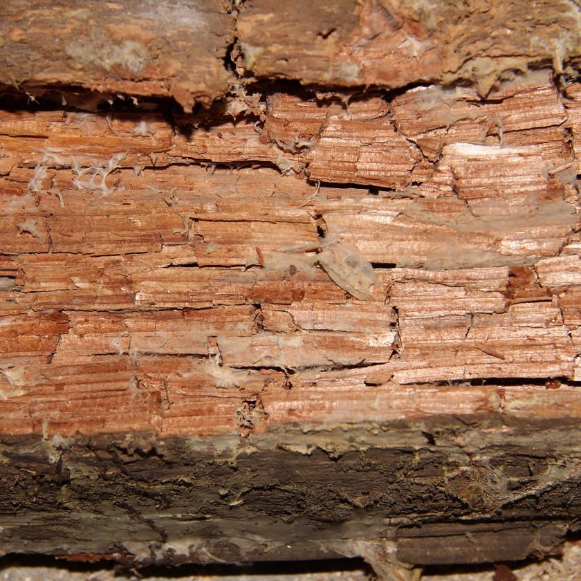 Geschädigtes Holzfachwerk