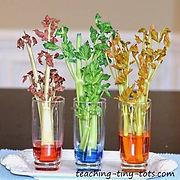 Celery Transpiration