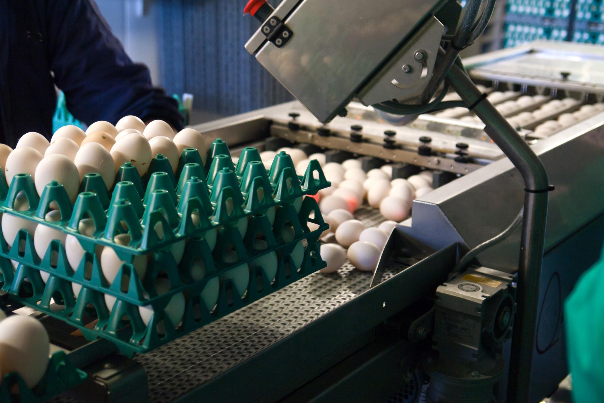 Impressão na casca de ovos