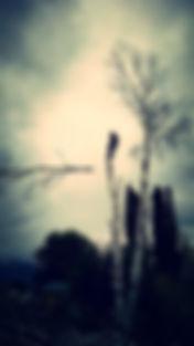 HTC PIC 4.jpg