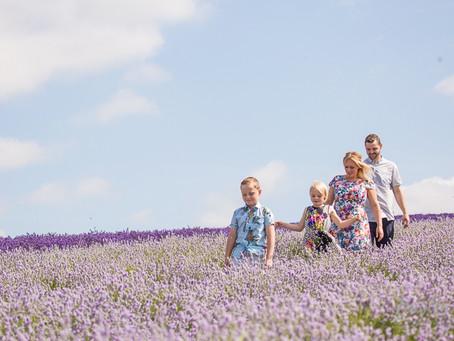 The Gladstones- Lavender Farm, Hitchin