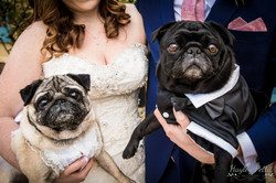 South Farm Wedding with Pugs