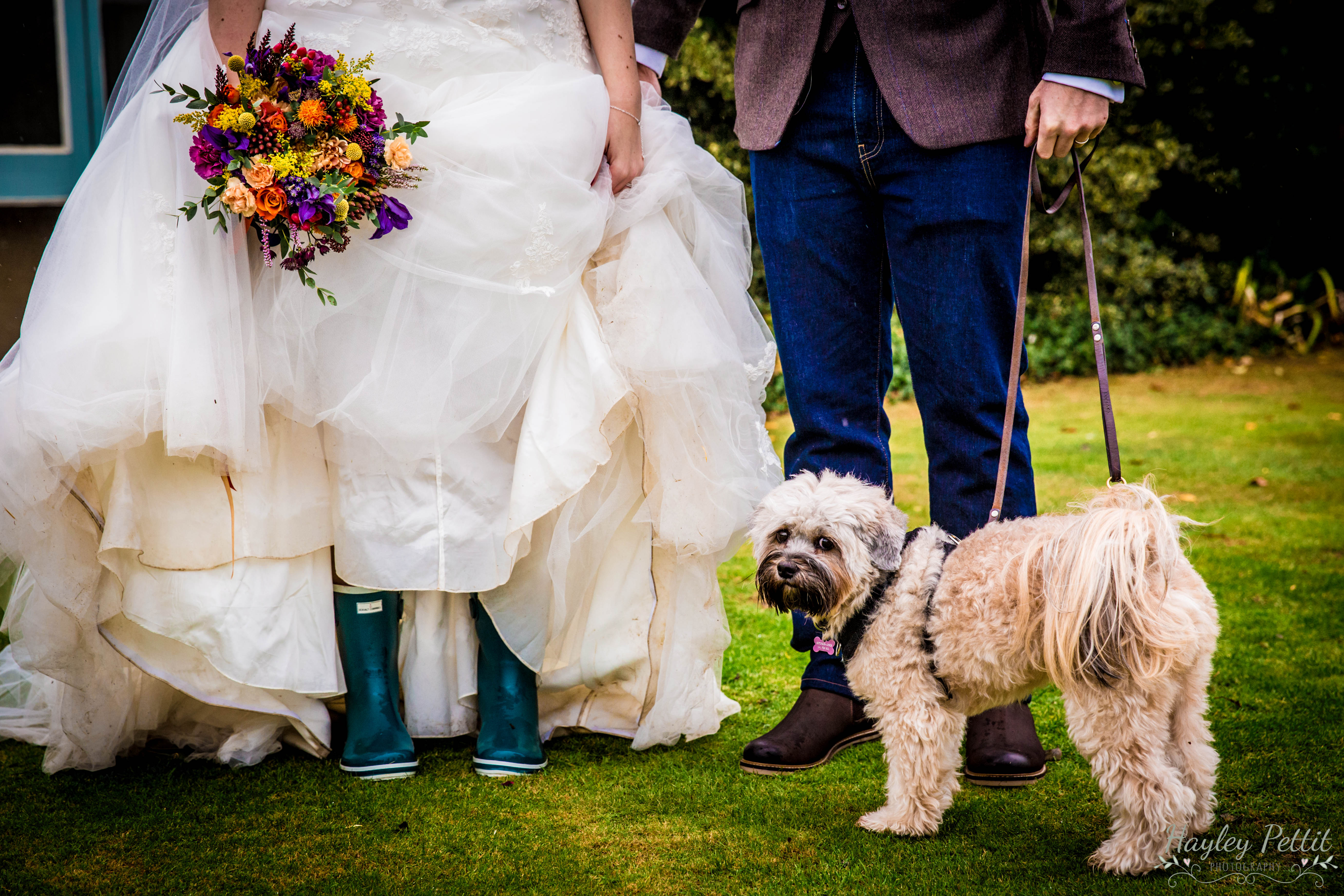 Dogs at Weddings St Neots