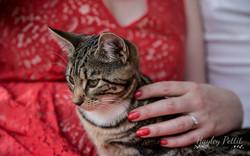 Kitten on Engagement Shoot