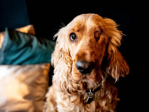 No. 77 - A Dog Friendly Cambridgeshire Pub