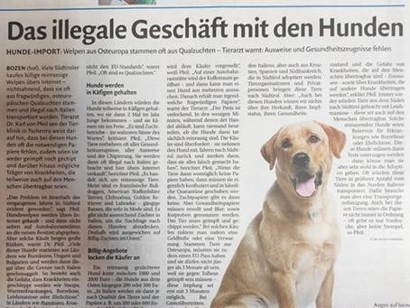 Das illegale Geschäft mit den Hunden