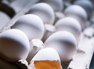 Cracking the Shell on Veganism