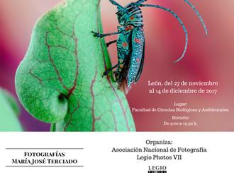 Exposiciones: Ávila y León.