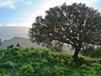 004 Aegean Residence Site.jpg