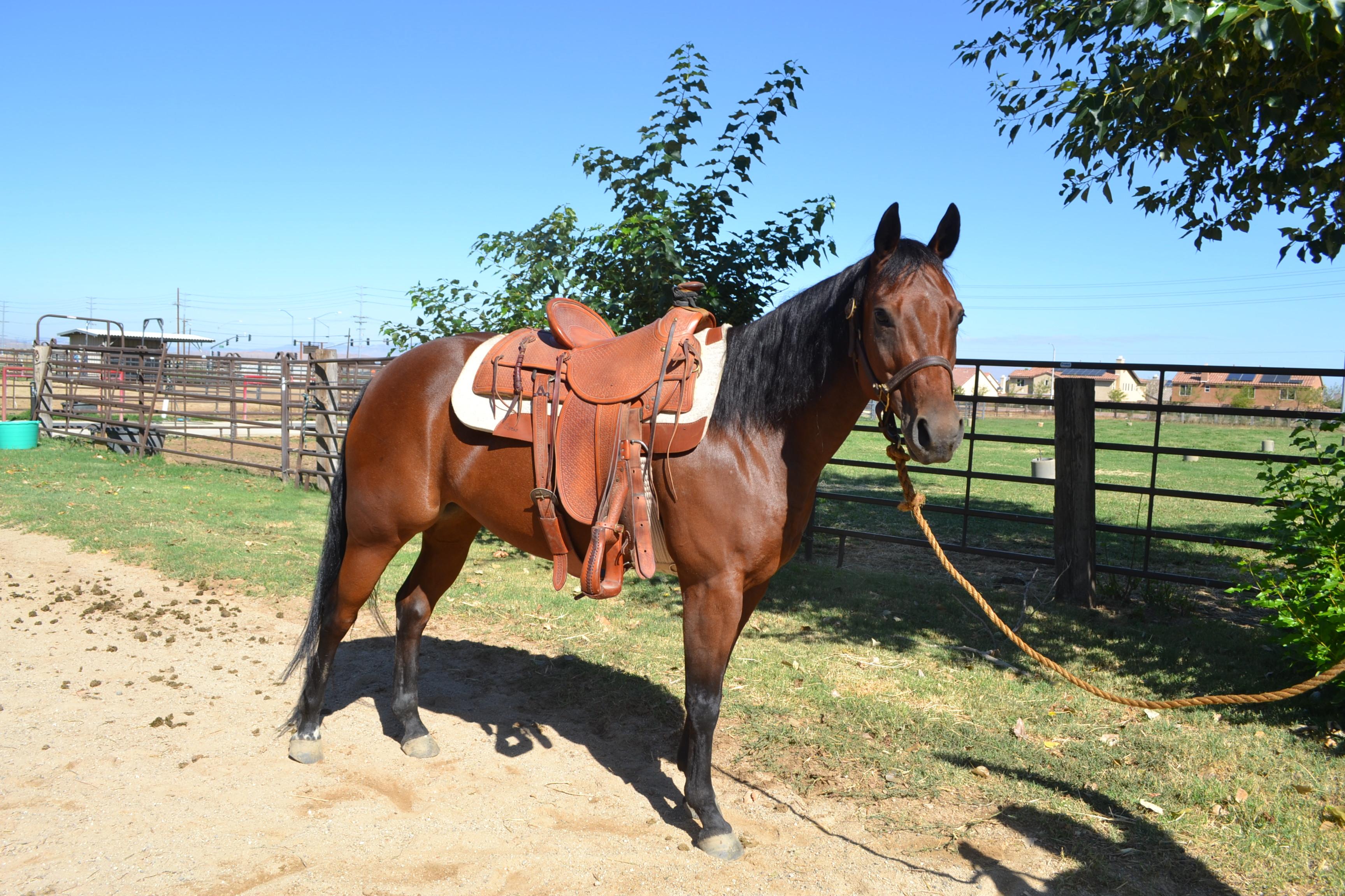 Gentle Riding Horses
