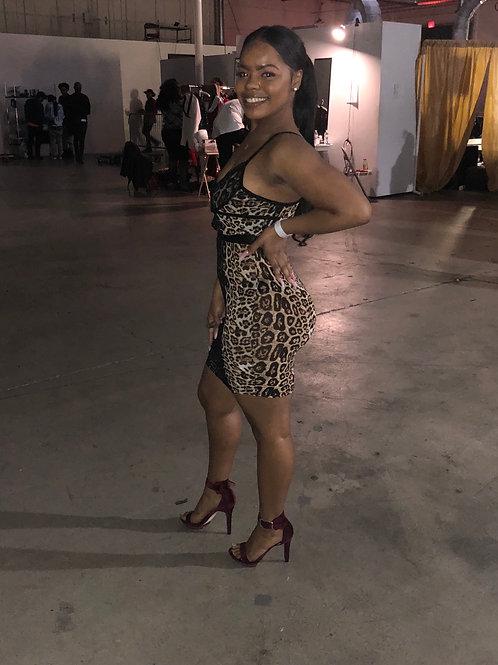 Cheetah Vibes