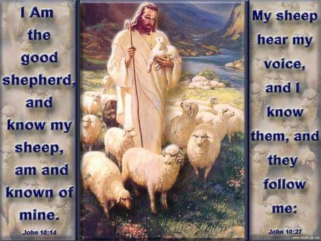 The Bummer Lamb