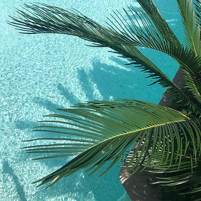 green-palm-tree-450038.jpg