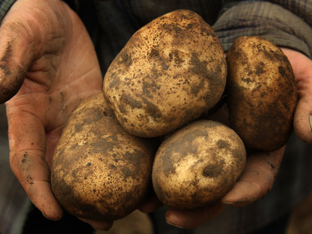 Potatoes Potatoes Potatoes!