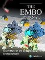 embj.v40.3.cover.jpg