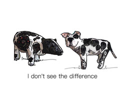 I don't see the difference