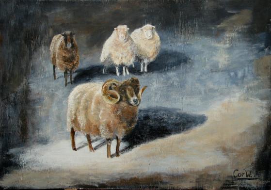 Onze schapen