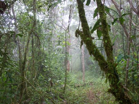 My Treacherous Journey Back to Alajuela