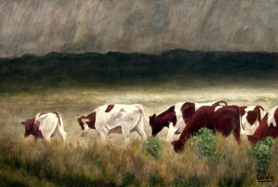 Koeien in de regen