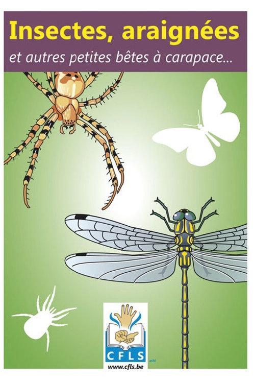 Insectes, araignées et autres...