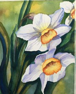 """""""Daffodills"""""""