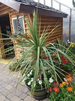 A spike plant.