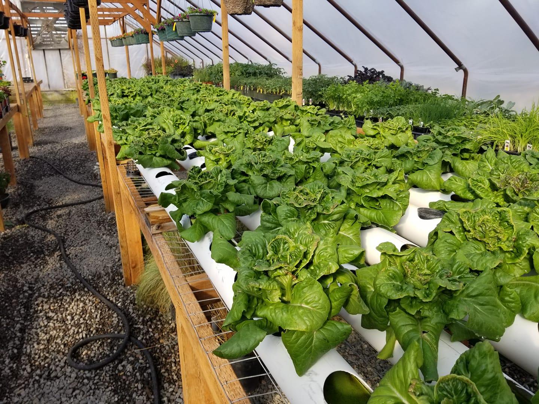 Hydroponic Grown Vegetables