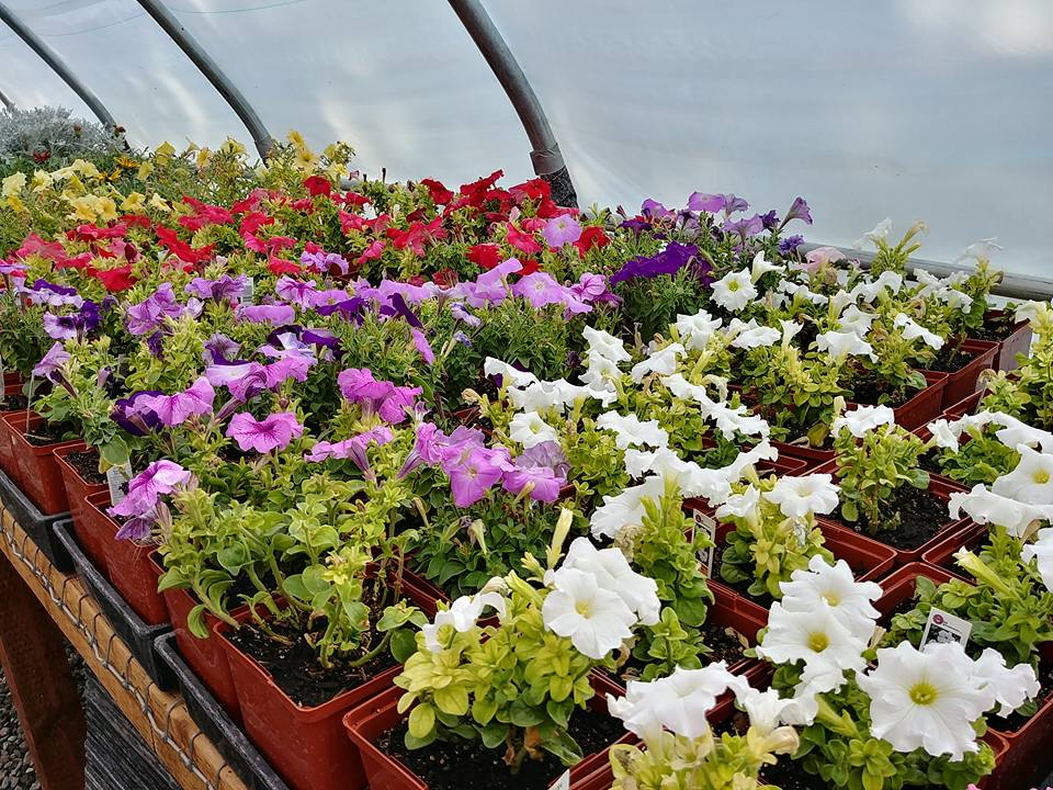 A bay of annuals.
