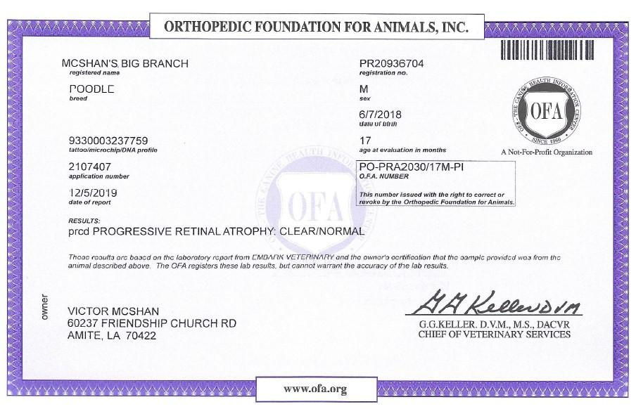 Twiggy OFA Certificate PRA.jpg