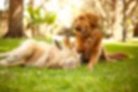 istockphoto-481634156-612x612.jpg