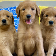 3 boys Brie - 2.jpeg