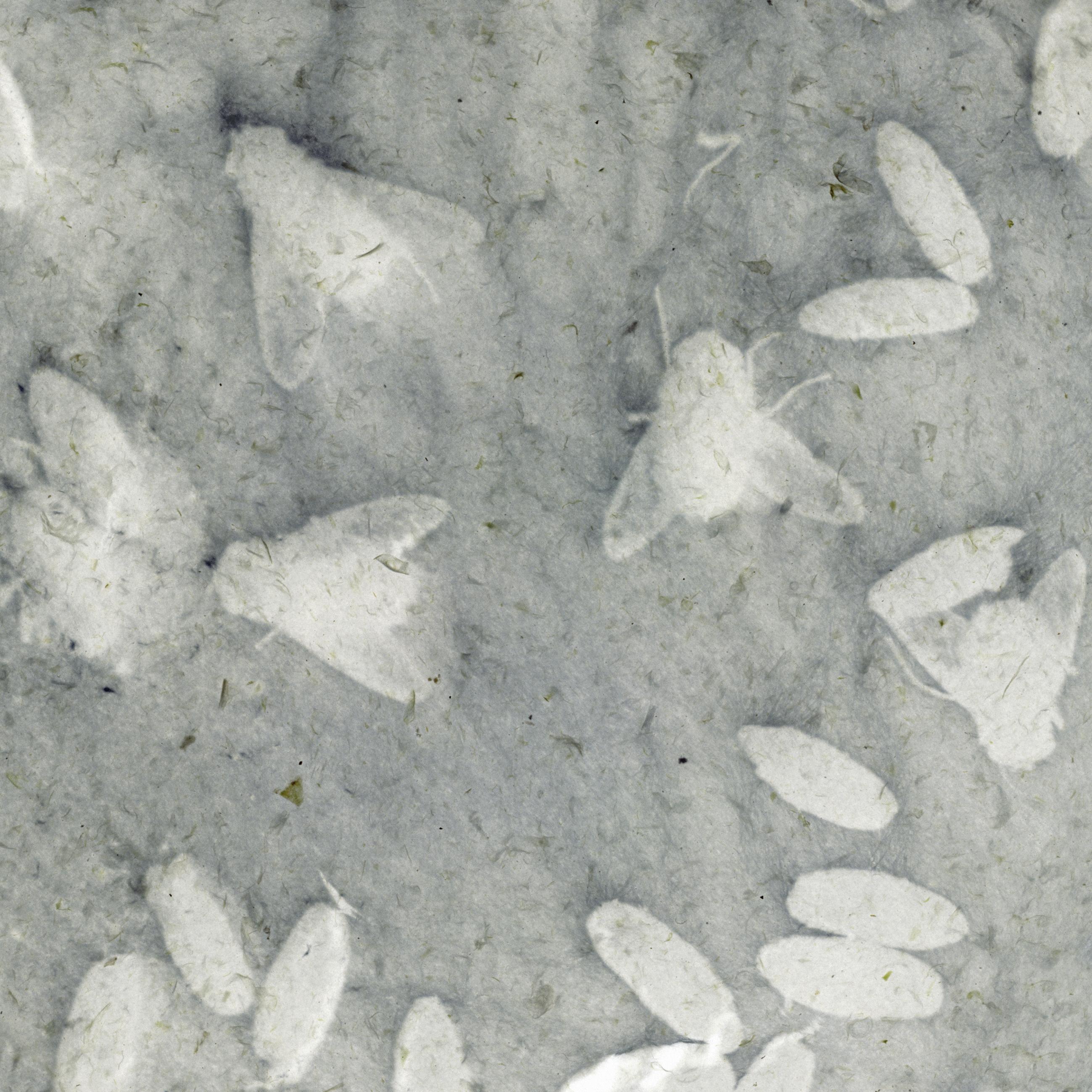 3_Lissel_Bakterium-Vanitas_Fliegen
