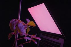 Nestori grow light, detail kopieren