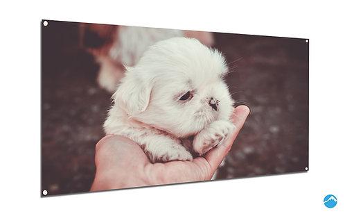 Puppy Welpe Hund