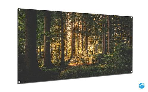 Wald Sonne