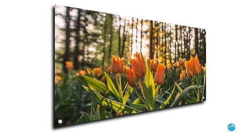 Blumen Tulpen Wald