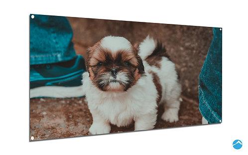 Puppy Welpe Hund Zwei