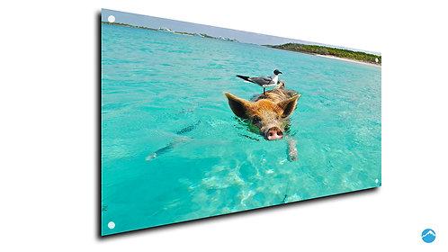 Schweinchen Meer
