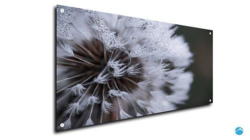 Eis Flower Blume